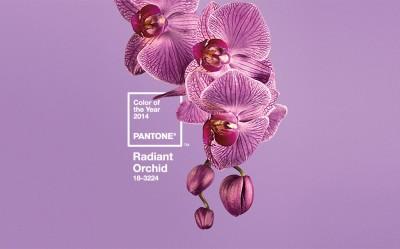 Pantone for 2014